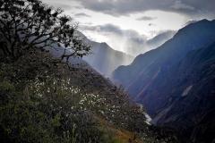 Camino a Choqek'iraw - Cusco