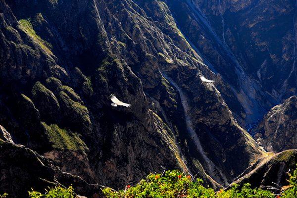 Cañón del Colca - Arequipa