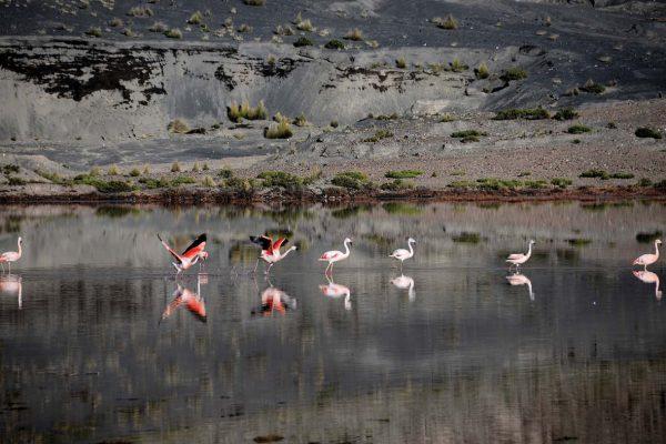 Reserva Nacional de Salinas y de Aguada Blanca - Arequipa