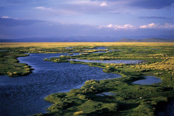 Bofedales de Tocra en la Reserva Nacional de Salinas - Arequipa