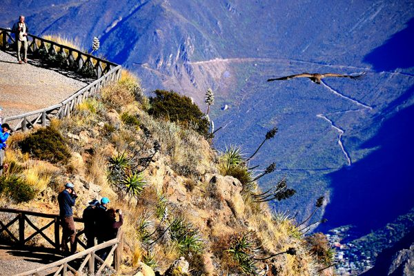 Cruz del Cóndor, Valle del Colca - Arequipa