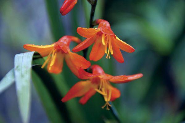 Flora de selva alta