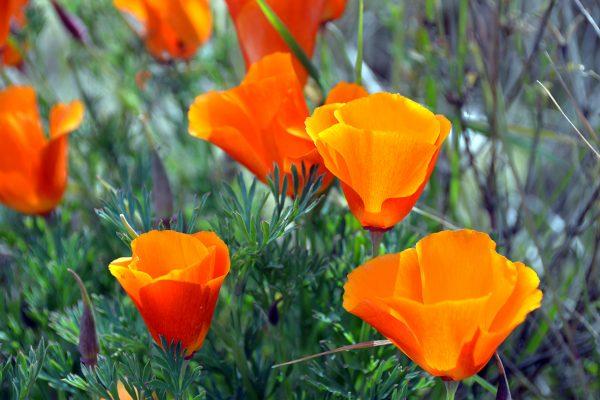 Flora andina