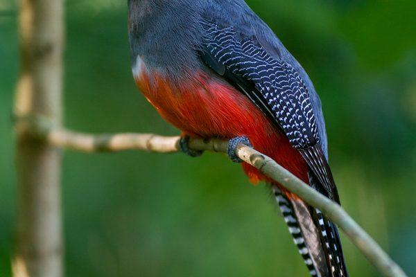 Reserva Nacional de Tambopata - Madre de Dios