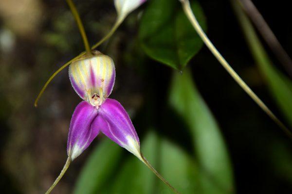 3. Orquídea en Machu Picchu