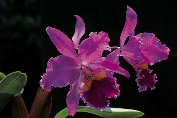 1. Orquídea en Machu Picchu