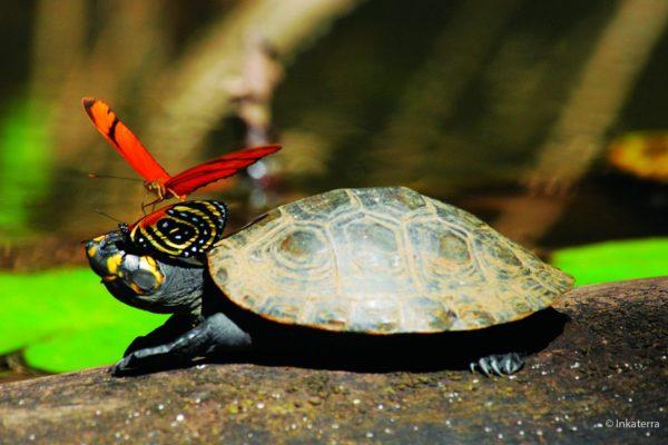 Fauna de la Reserva Nacional de Tambopata - Madre de Dios